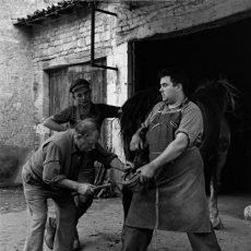 Le maréchal-ferrant et ses aides clouent un fer au sabot d'un cheval