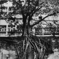 Étudiants dans les jardins de l'Université fédérale
