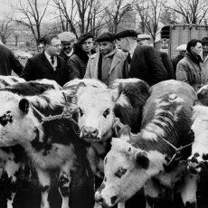 La foire aux bestiaux